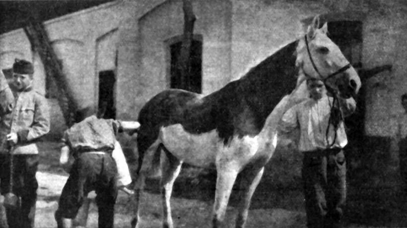 Fig. 2. Soldiers painting a white horse. (Ilustrirani glasnik 1915, no. 8, 92)