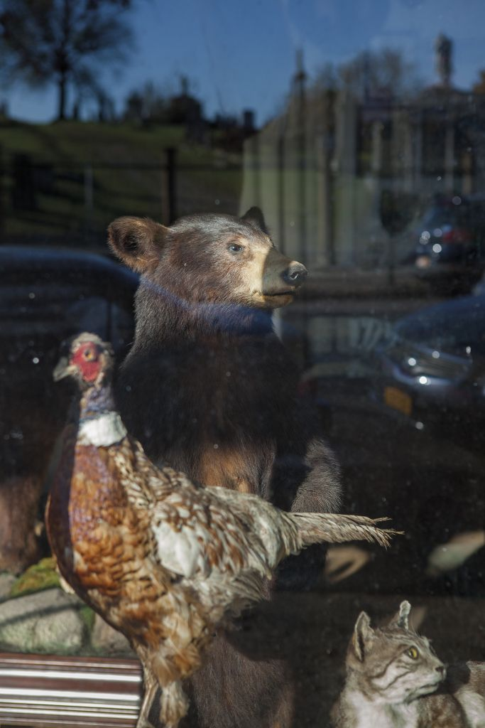 Located next to a cemetery, John Youngaitis's taxidermy establishment is the only one in NYC.