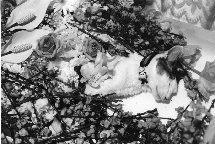 Nobuyoshi Araki: Araki's Cat Chiro, 2010. Courtesy of DazedDigital.