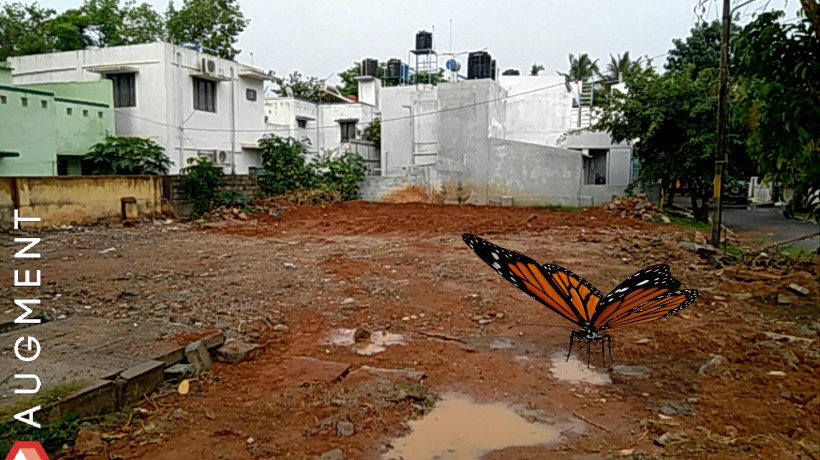 Anisha Baid: Wild Life.