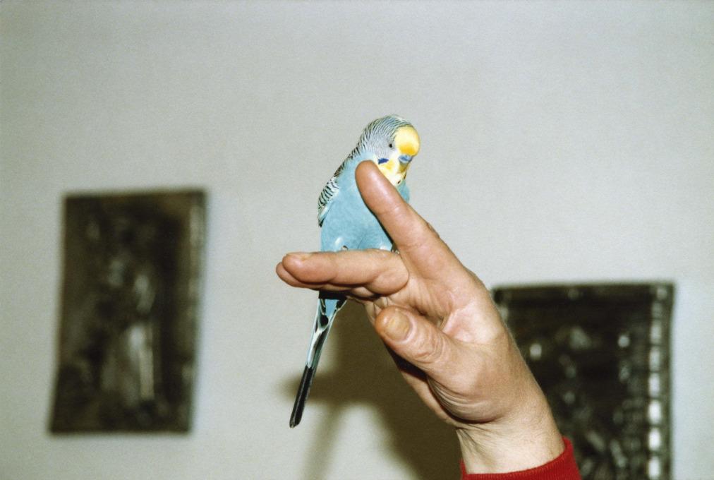 Dagmar Kolatschny: Fauna.
