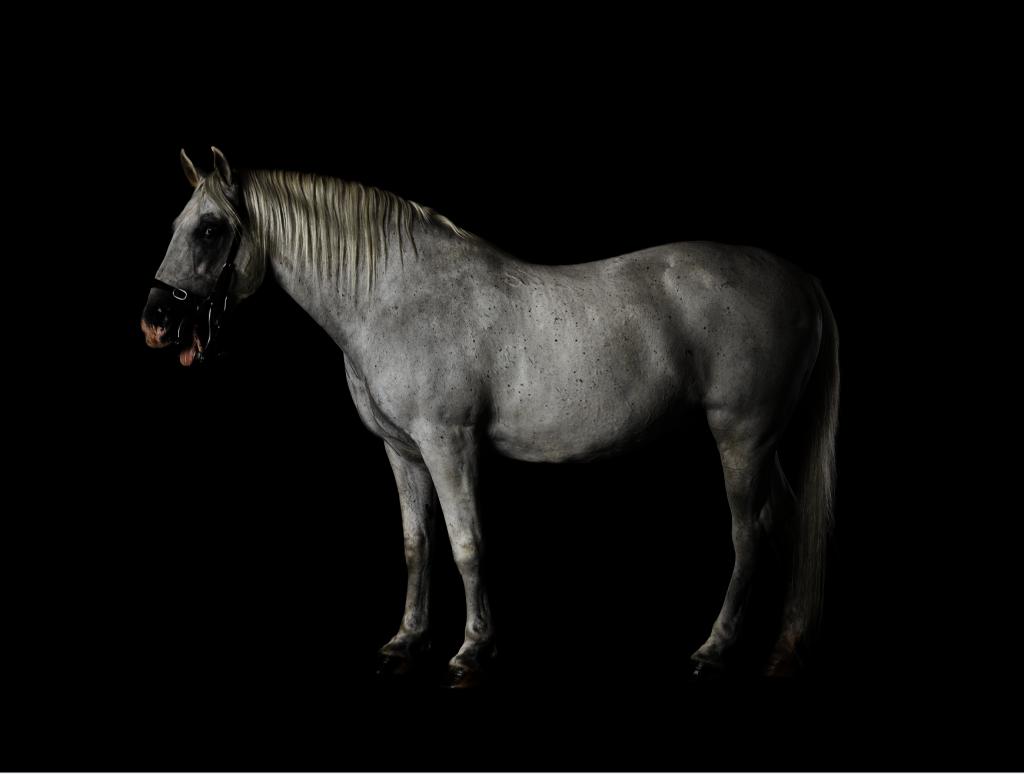 Jasmina Cibic, Lipizzaner 085 Favory Canissa - Naepolitano Thaisa XL, C-type print, 100 cm x 80 cm, 2020.